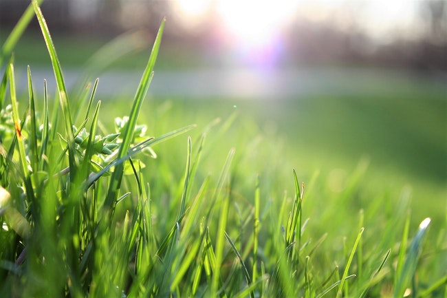 Get Ready for Spring and Summer With an Irrigation Service Plan