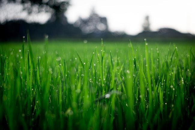 Commercial Irrigation Installation Basics: Sprinklers vs. Drip Irrigation