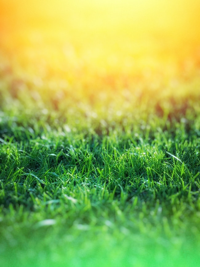 3 Lawn Irrigation Tips to Help Your Grass Thrive