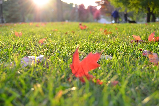 When is the Best Time for Residential Irrigation Installation?