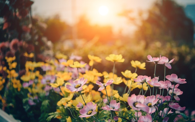 3 Ways to Make the Most of Your Lawn Sprinkler System